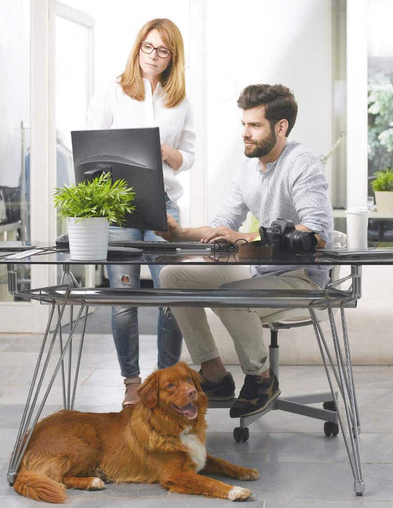 ein team von hundeernährungsberatern informiert sich auf der teampartner-webite von anifit im internet über das vertriebssystem und die umfangreichen marketing-tools von provital